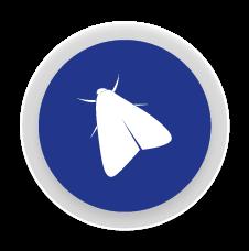 Arnes - Control i eliminació de plagues de arnes