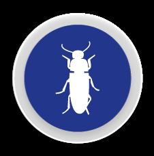 Corcs - Control i eliminació de plagues de corcs