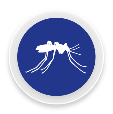 Mosquits - Control i eliminació de plagues de mosquits