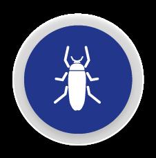 Paneroles - Control i eliminació de plagues de paneroles