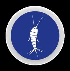 Peixets de Plata - Control i eliminació de plagues de peixets d´argent