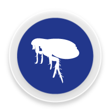 Puces - Control i prevenció de plagues de puces a Girona i Barcelona
