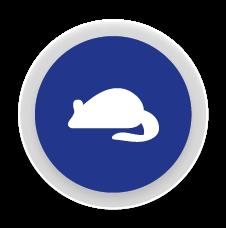Rosegadors - Control i eliminació de plagues de rosegadors