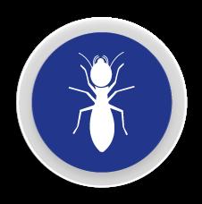 Tèrmits - Control i eliminació de plagues de tèrmits