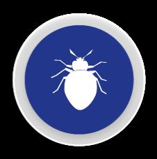 Xinxes - Control i eliminació de plagues de Xinxes