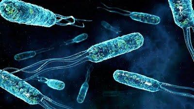 Desinfecció de Bacteris. Prevenció amb Cèntric Plagues a Girona i Barcelona